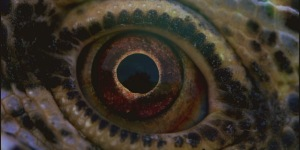 voyage of time 2